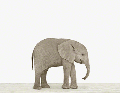 baby_elephant_nursery_art_theanimalprintshop.jpg