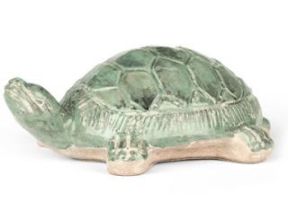 Aerin+Turtle.jpg