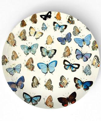Butterflies+!!.jpg