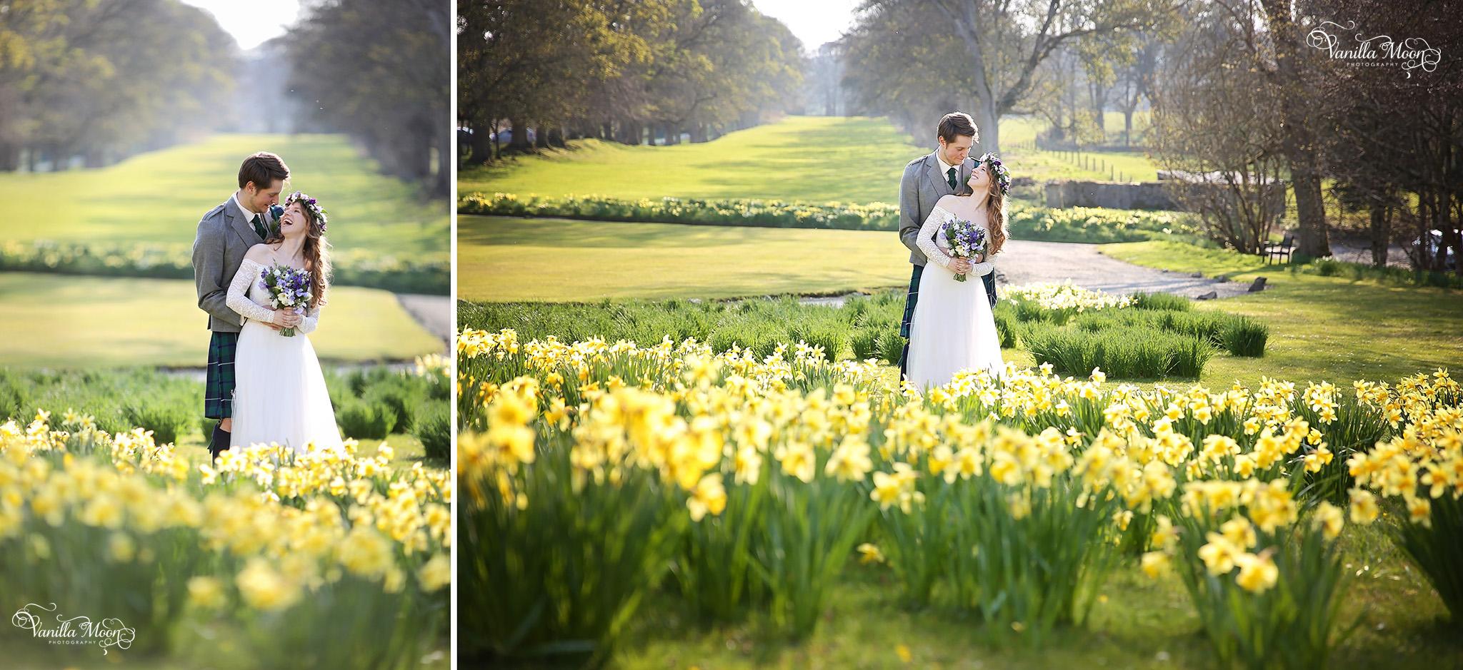 marjorie daffodils.jpg