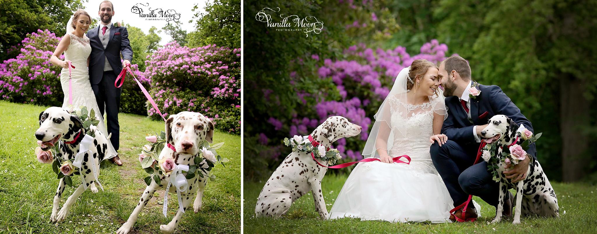Coldstream wedding photography dog wedding photography