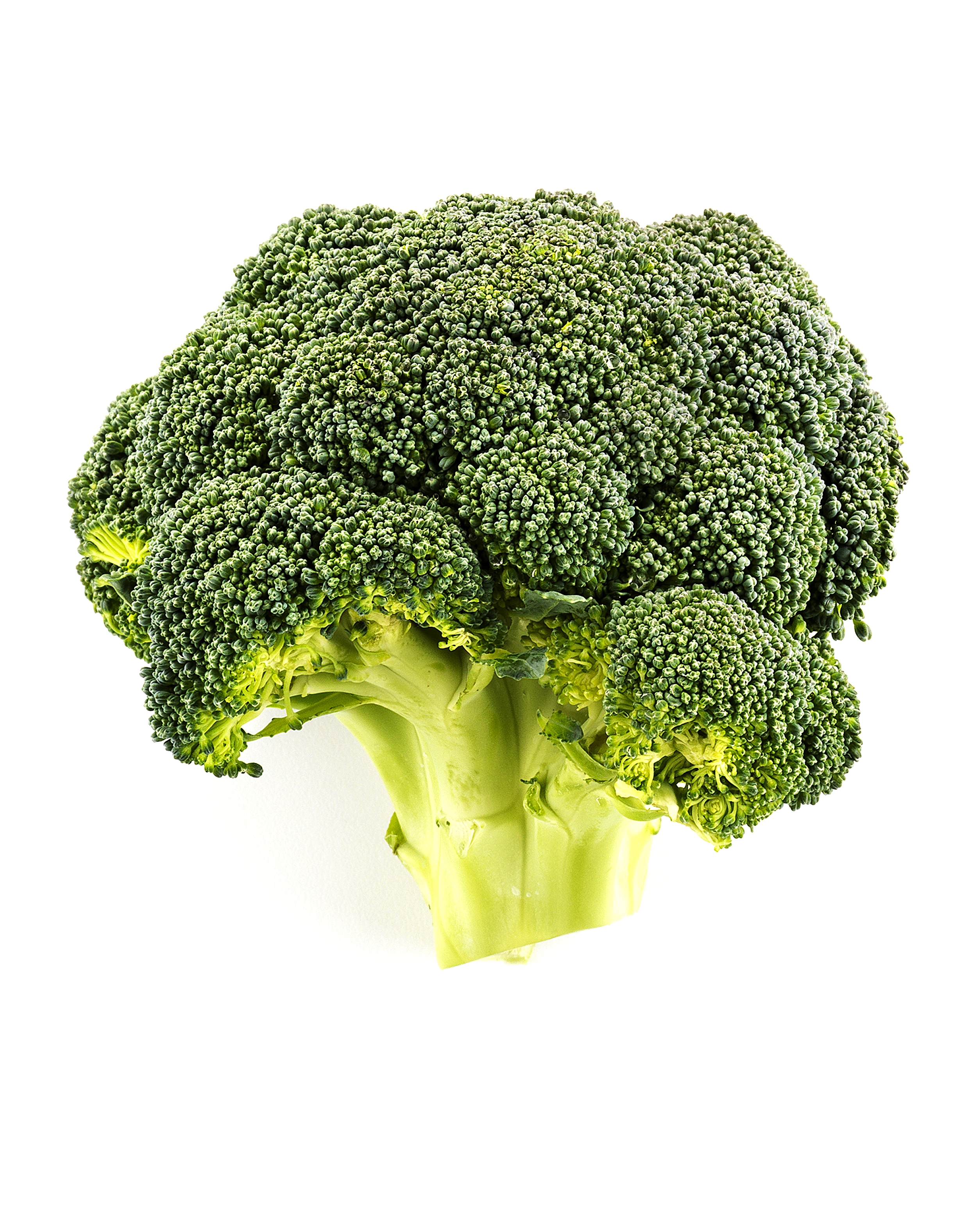 so07056_TL_Broccoli_ 013 copy.jpg