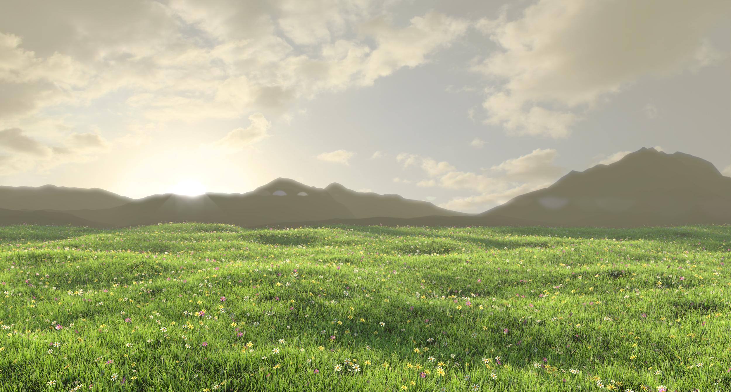 Grass environment