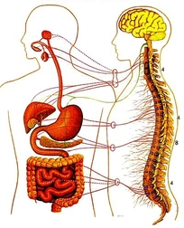 Zone-4-Digestive-System.jpg