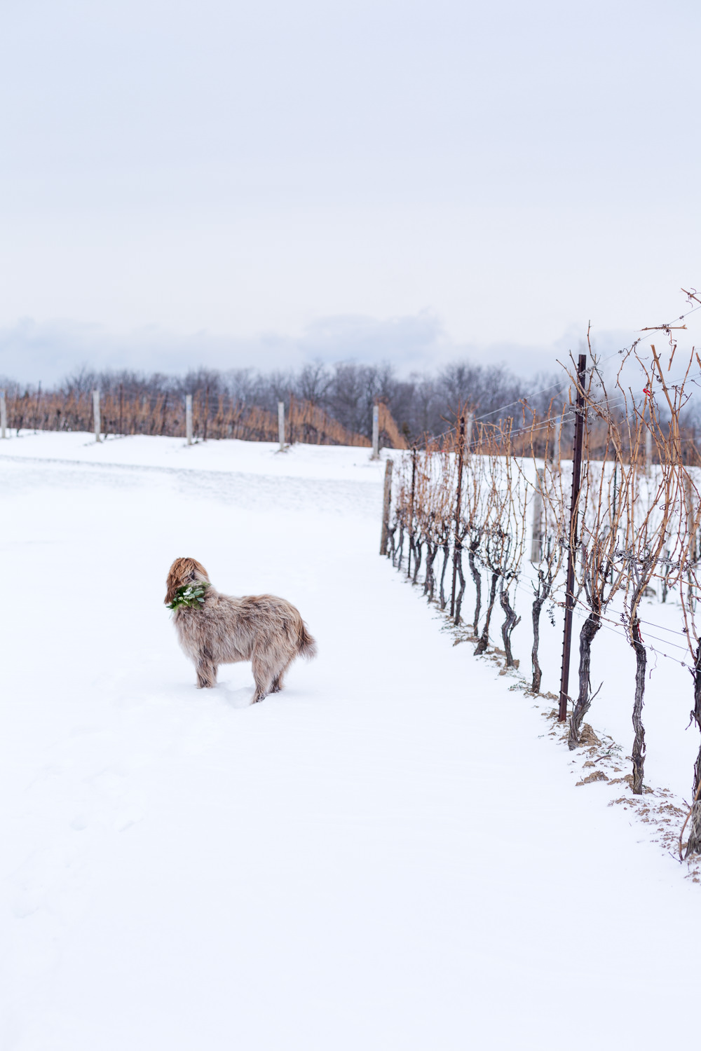 2016 Ice WIne Editorial119.jpg