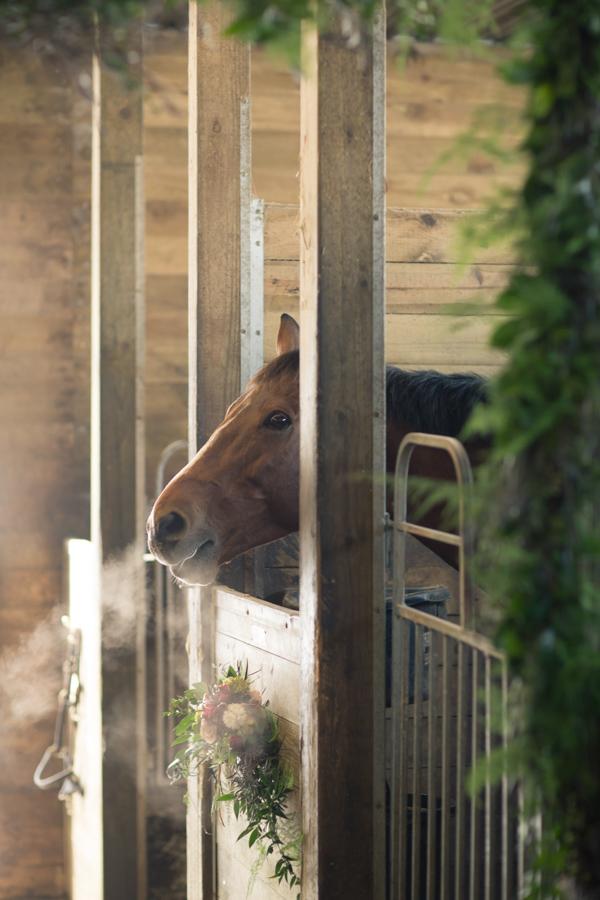 horse barn niagara creative fleurish design studio