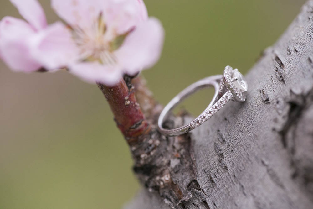 philiosophy-studios-engagement-session-spring-orchard-blossoms-vineyard-bride-swish-list-vendor-niagara-toronto-wedding-photographer023.JPG