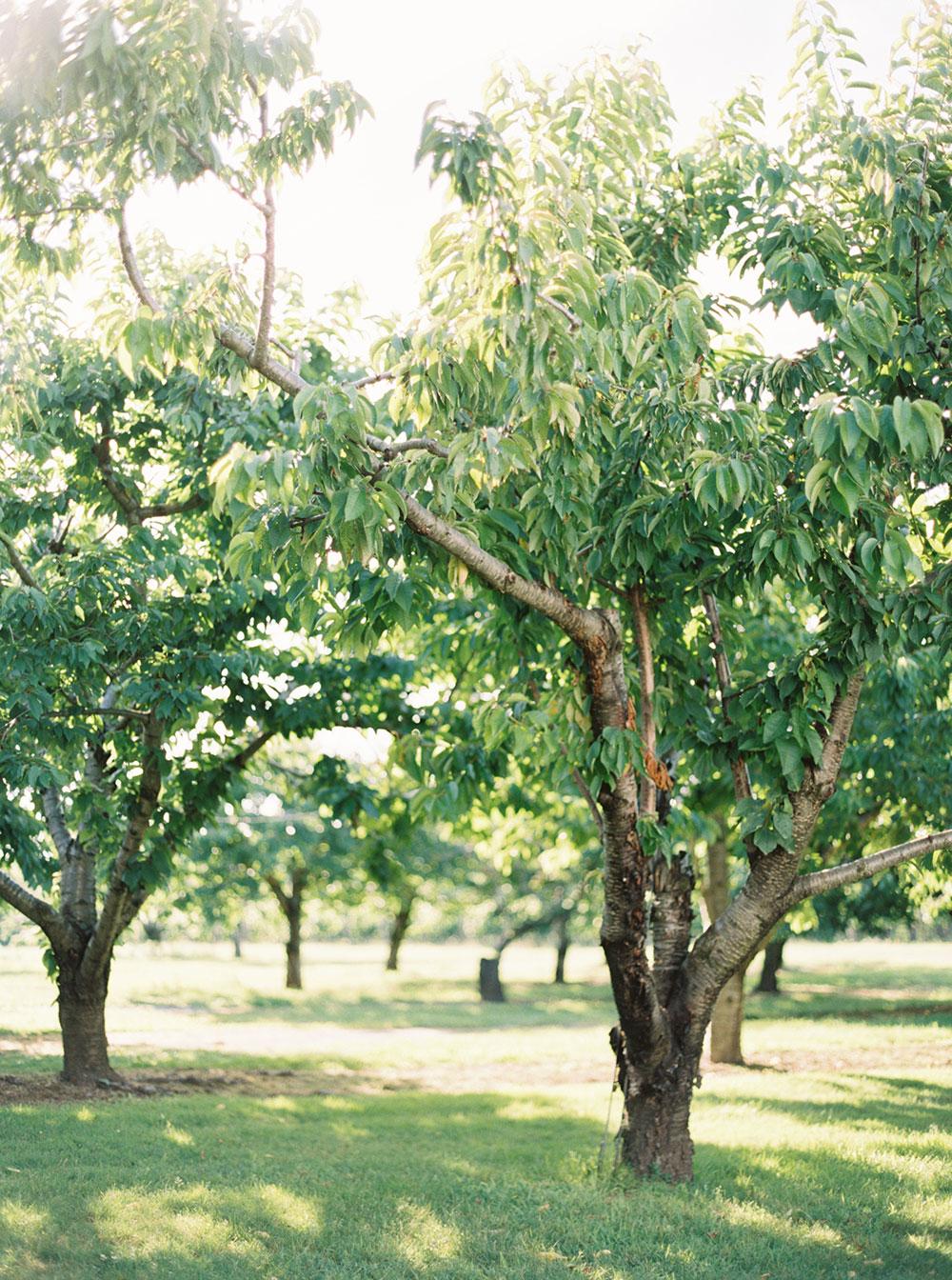 kurtz-orchards-wedding-gracewood-estate-niagara-on-the-lake-photo-by-katie-nicolle-photography-0072.JPG