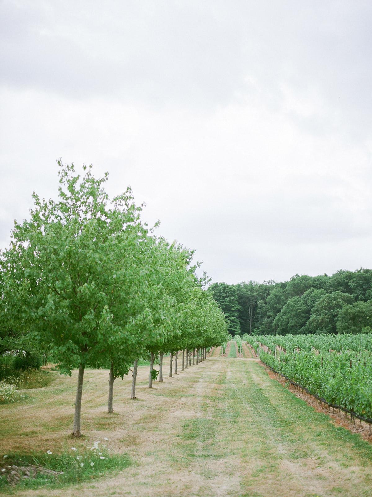 jennifer-xu-photography-vineyard-bride-swish-list-rosewod-eatstes-winery-beamsville-wedding-editorial-21.jpg