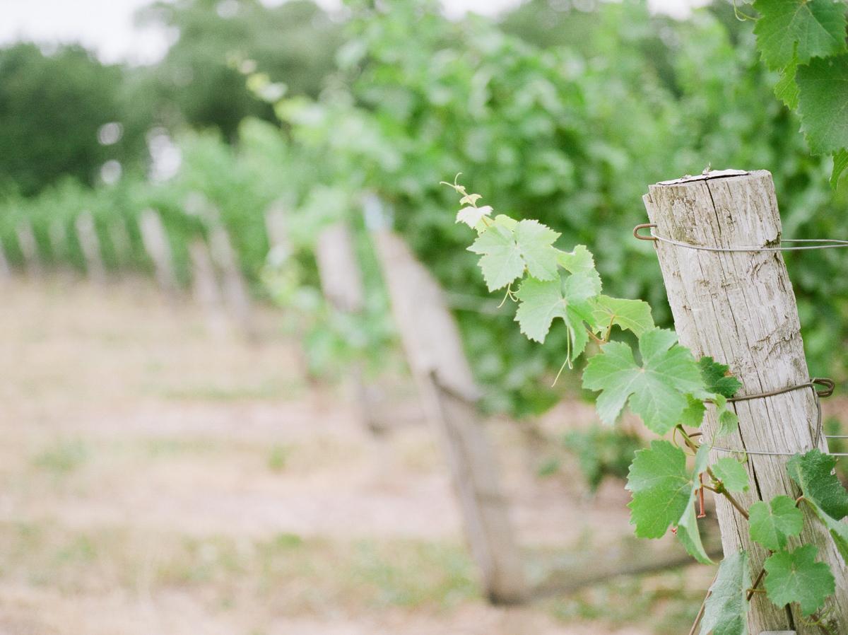jennifer-xu-photography-vineyard-bride-swish-list-rosewod-eatstes-winery-beamsville-wedding-editorial-23.jpg