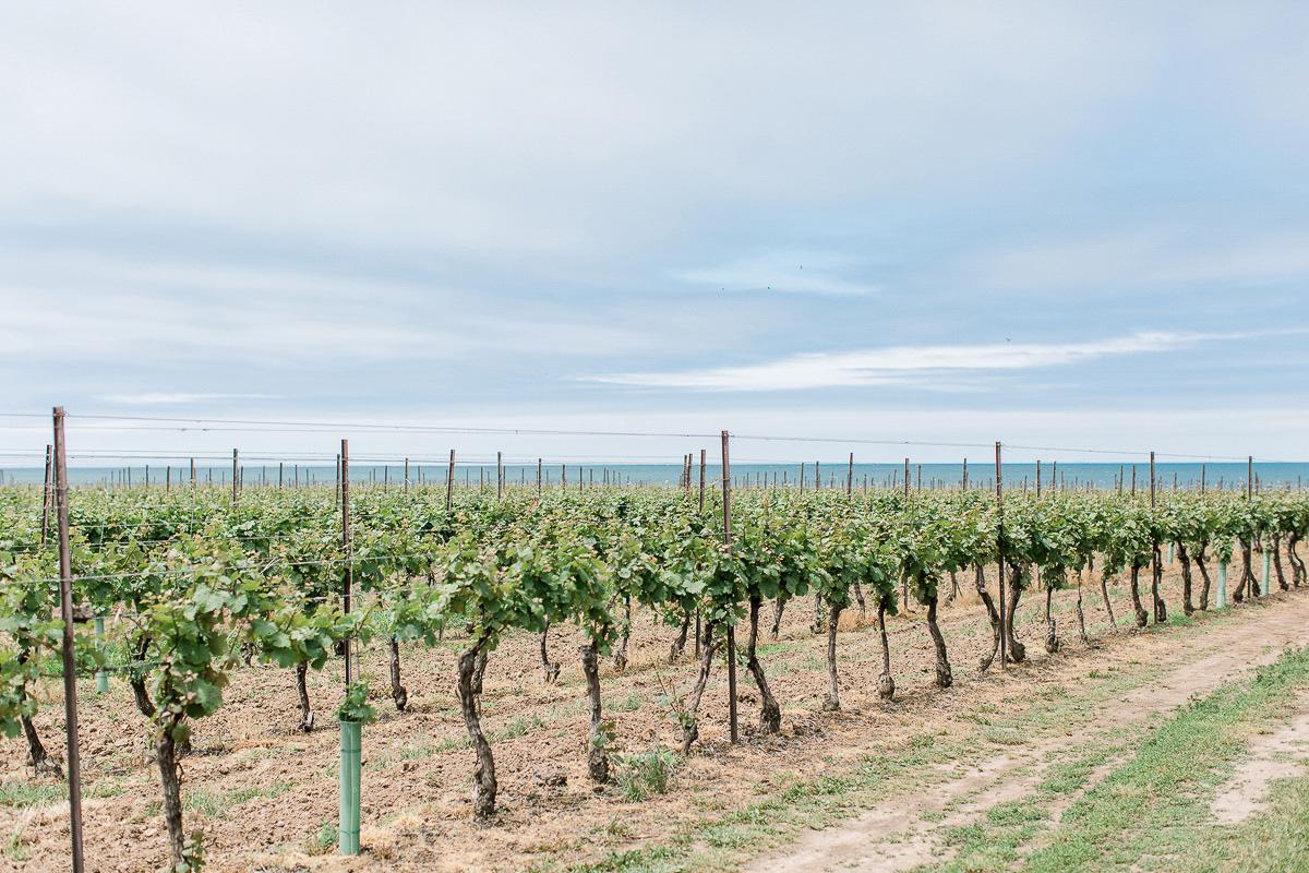 beatrice-elford-photography-vineyard-bride-swish-list-balls-falls-vineland-wedding-18.jpg
