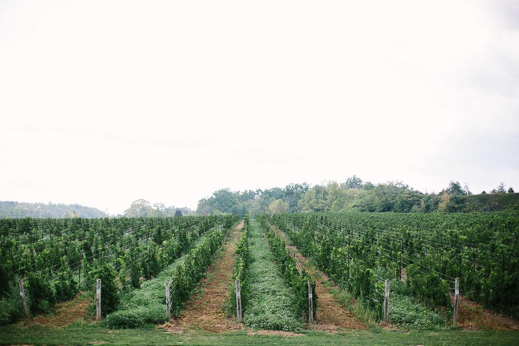 corynn-fowler-photography-vineyard-bride-swish-list-featherstone-winery-vineland-wedding-4.jpg