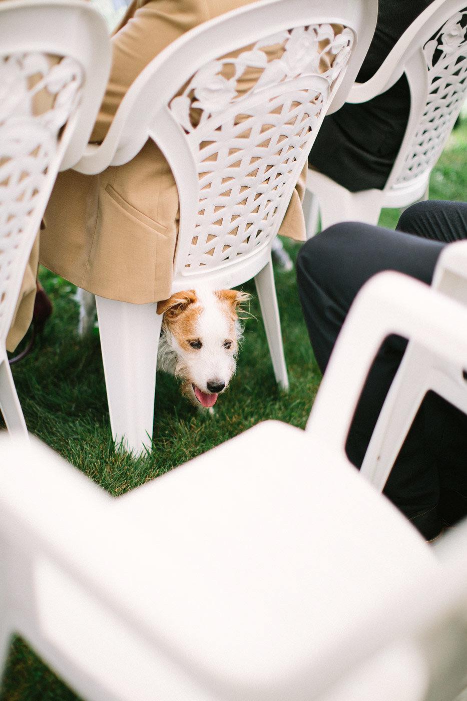 corynn-fowler-photography-vineyard-bride-swish-list-featherstone-winery-vineland-wedding-5.jpg