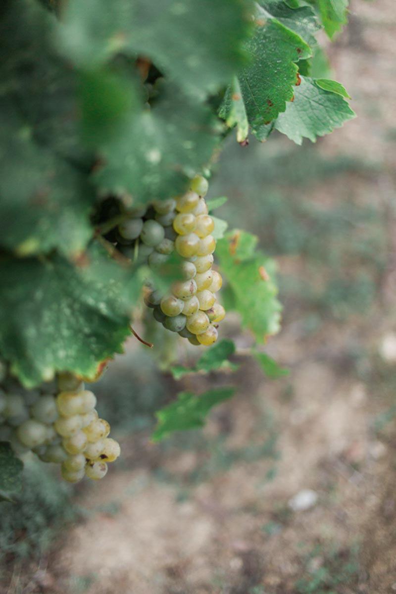 brittany-williams-photography-vineyard-bride-swish-list-the-grand-victorian-niagara-on-the-lake-wedding-29.jpg