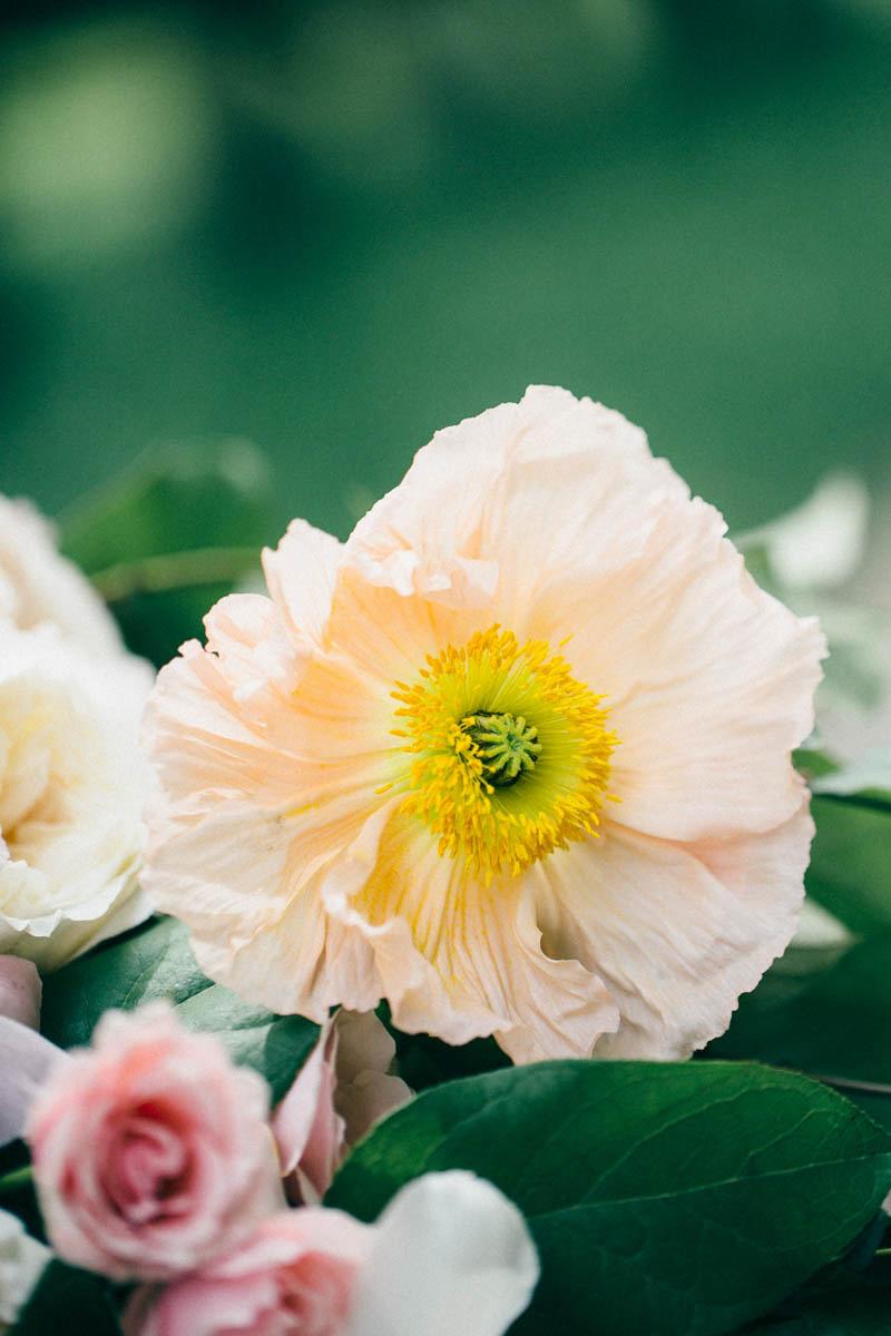 jessica-little-photography-vineyard-bride-swish-list-botanical-gardens-niagara-falls-editorial-5.jpg