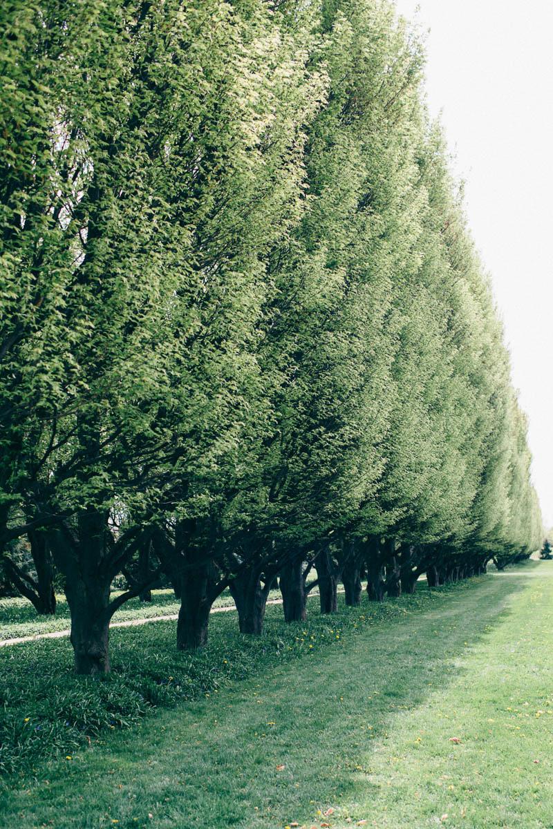 jessica-little-photography-vineyard-bride-swish-list-botanical-gardens-niagara-falls-editorial-21.jpg