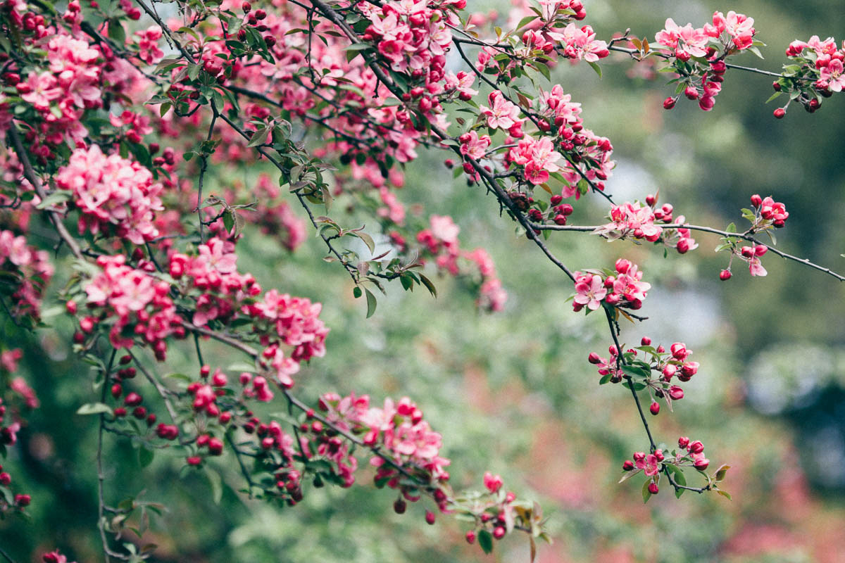 jessica-little-photography-vineyard-bride-swish-list-botanical-gardens-niagara-falls-editorial-24.jpg