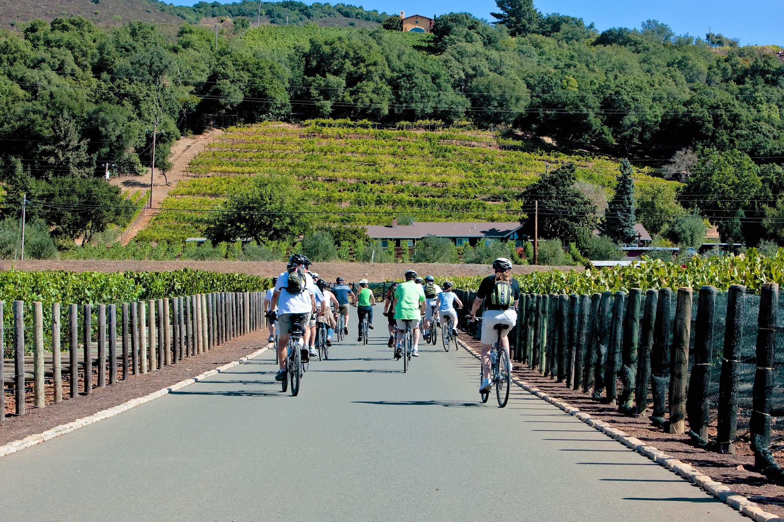 Cycling through the vineyards.