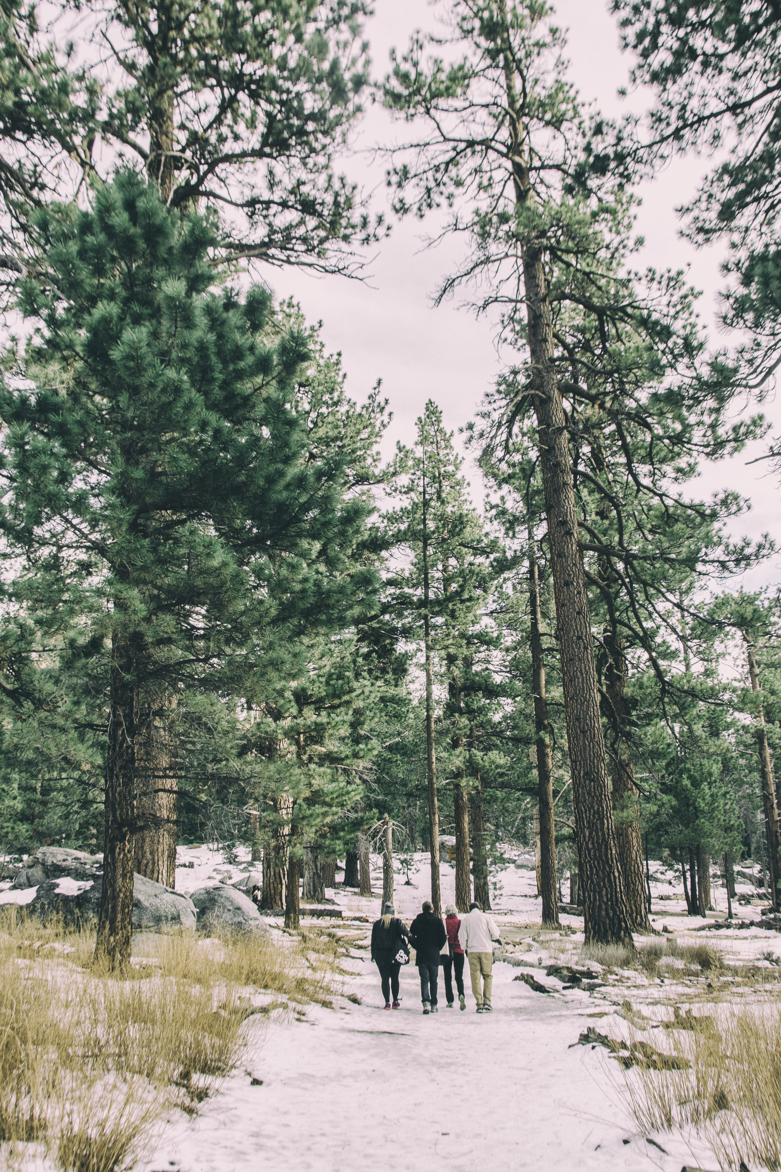 Snow covered hiking path, Mount San Jacinto State Park