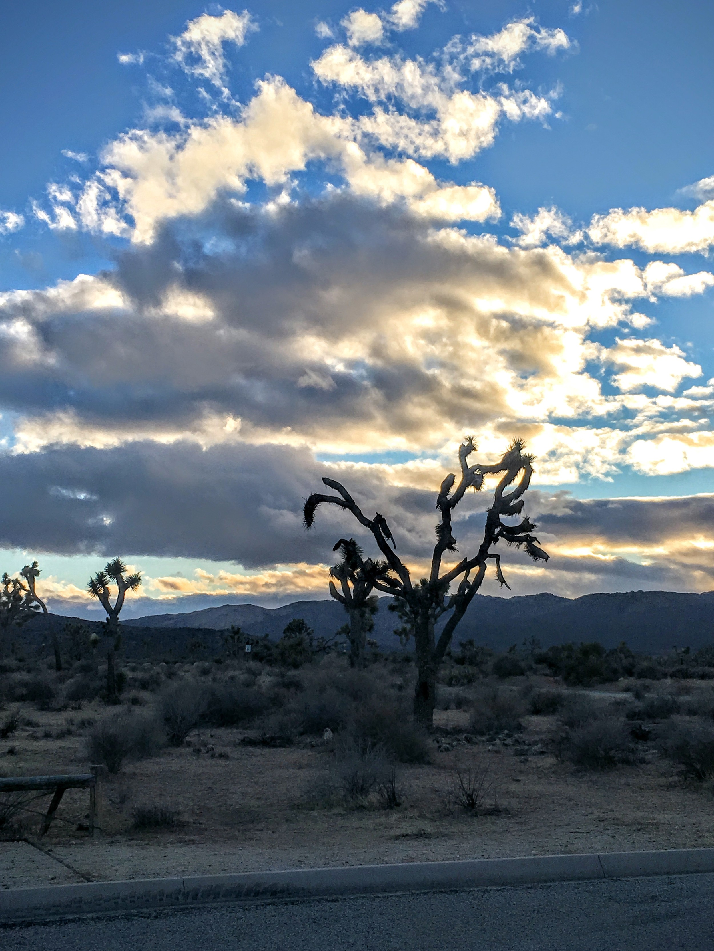 Clouds over the park, Joshua Tree National Park