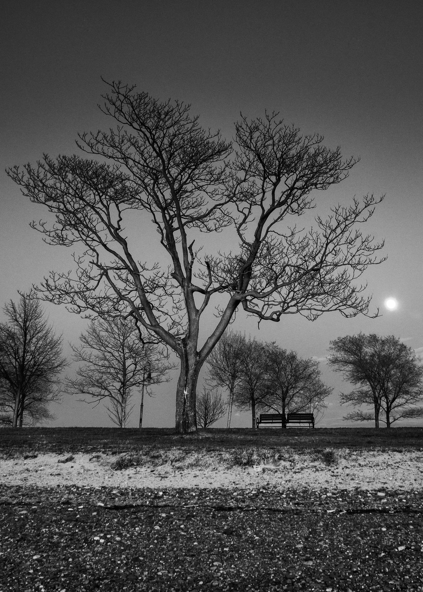 Castle Island Tree and Moon