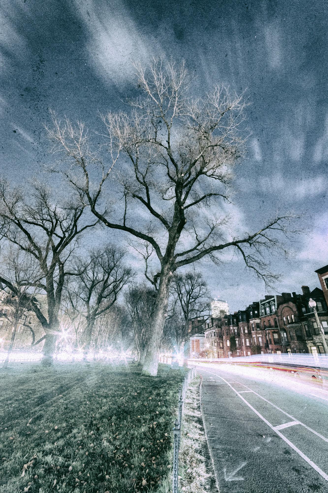 Commonwealth Tree