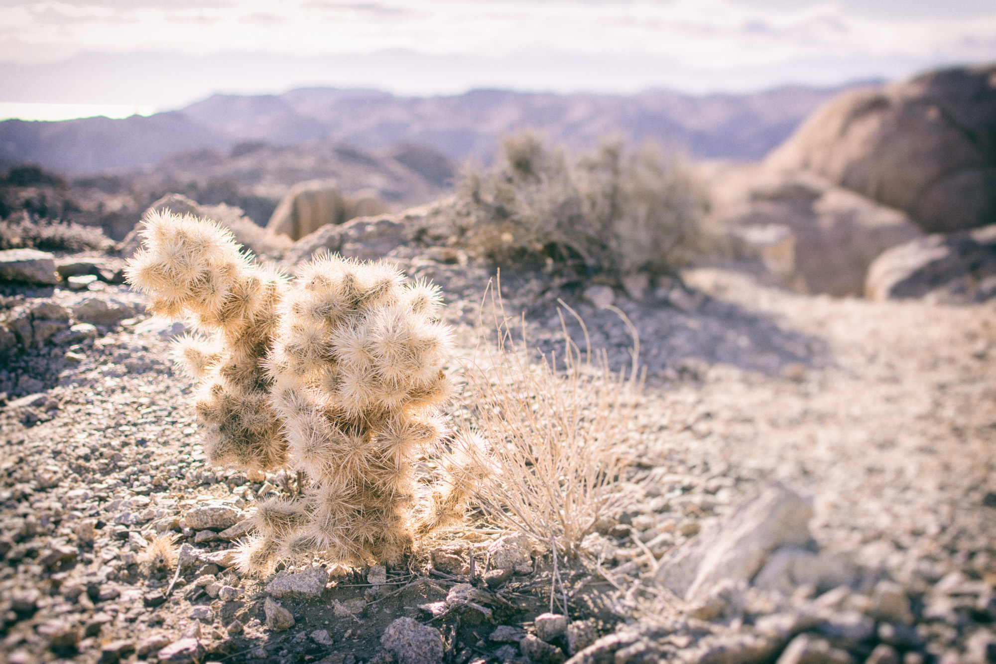 Desert Plant and View