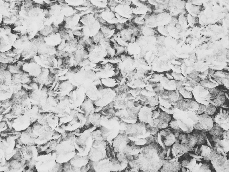 Hoarfrost | Mallorie Owens