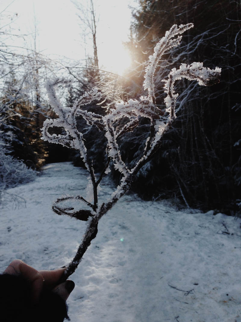 Winter | Mallorie Owens