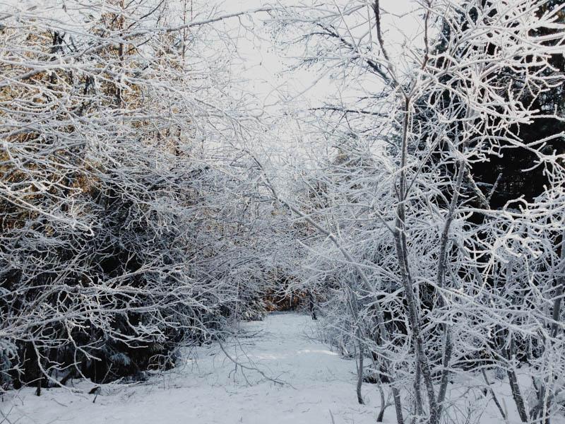 Winter Wonderland | Mallorie Owens