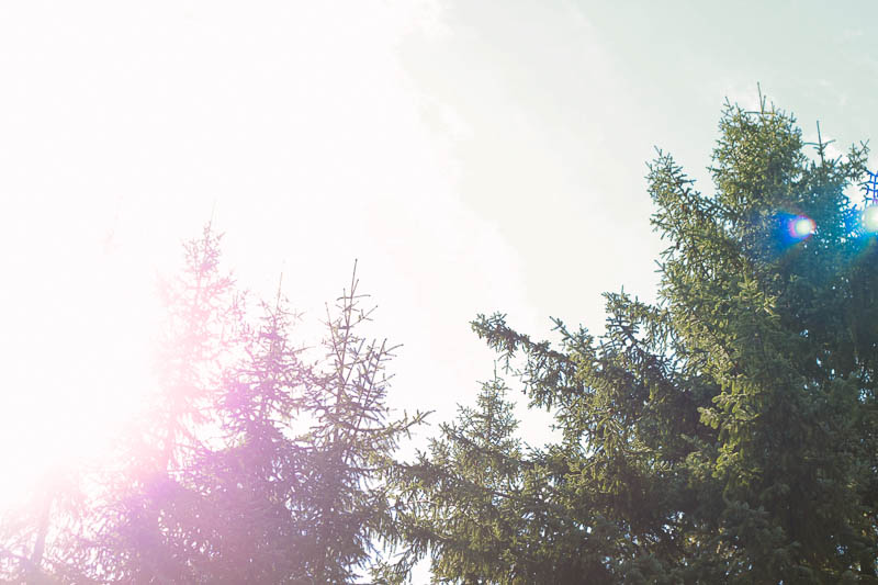 Sunshine | Mallorie Owens