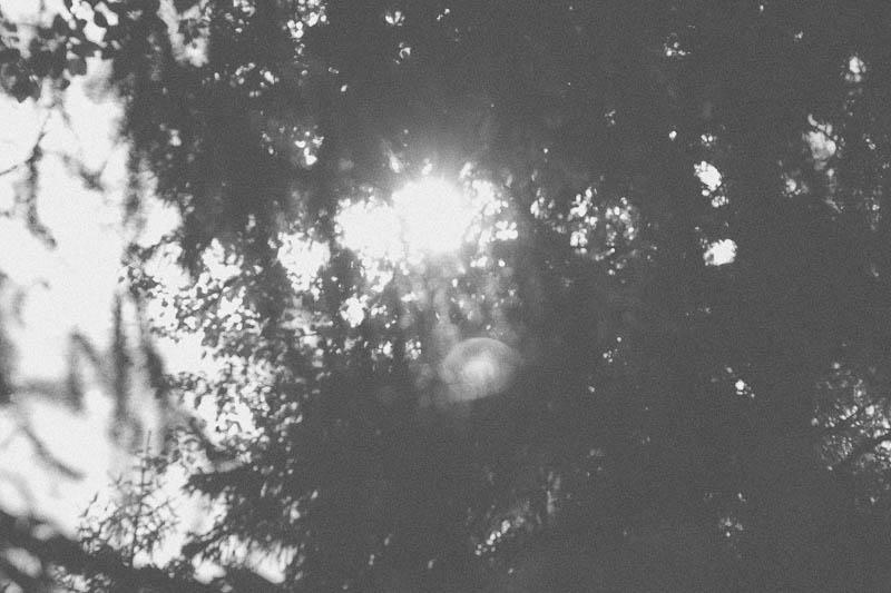 Sun Flare | Mallorie Owens