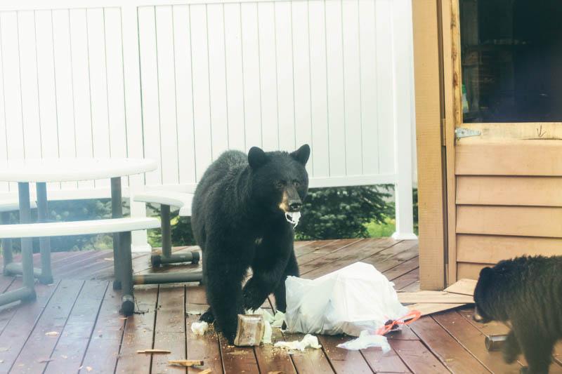 Bear | Mallorie Owens