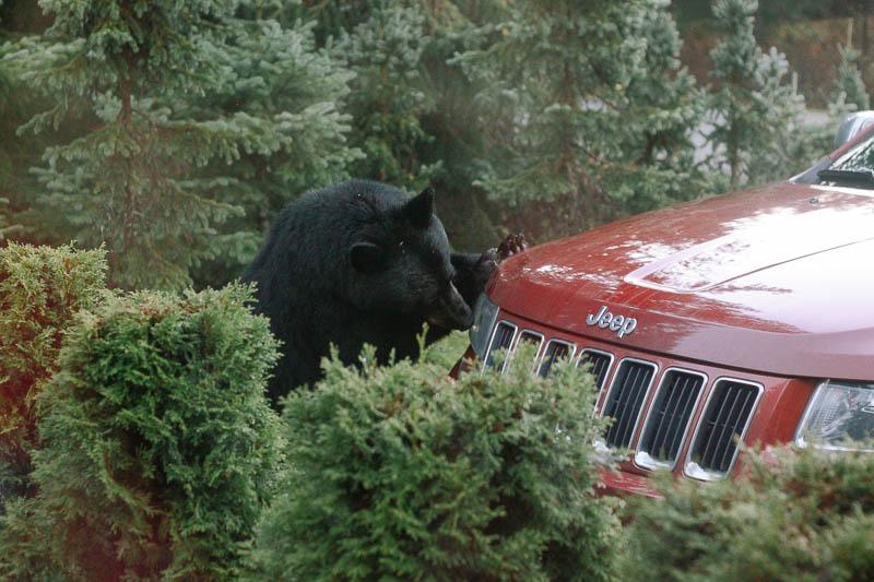 Bear   Mallorie Owens