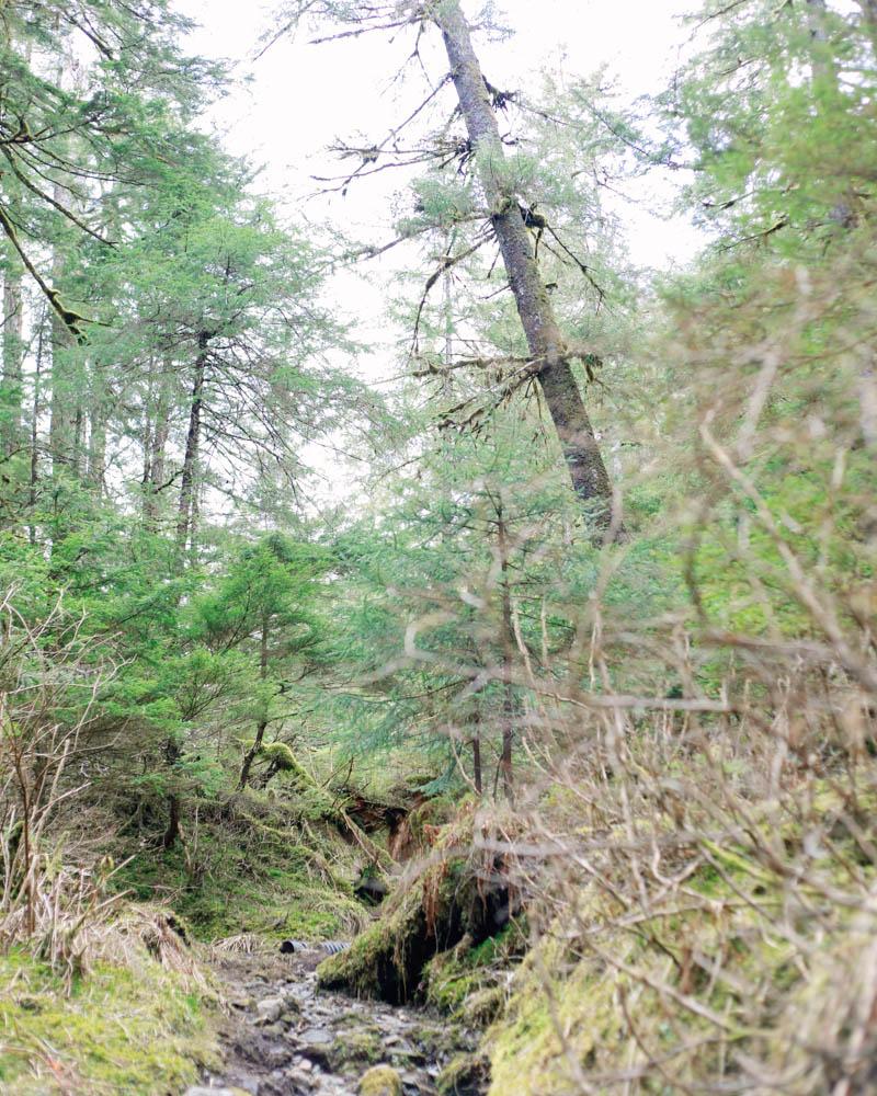 Places to Visit in Juneau, Alaska ↠ Lemon Creek Trail   Mallorie Owens