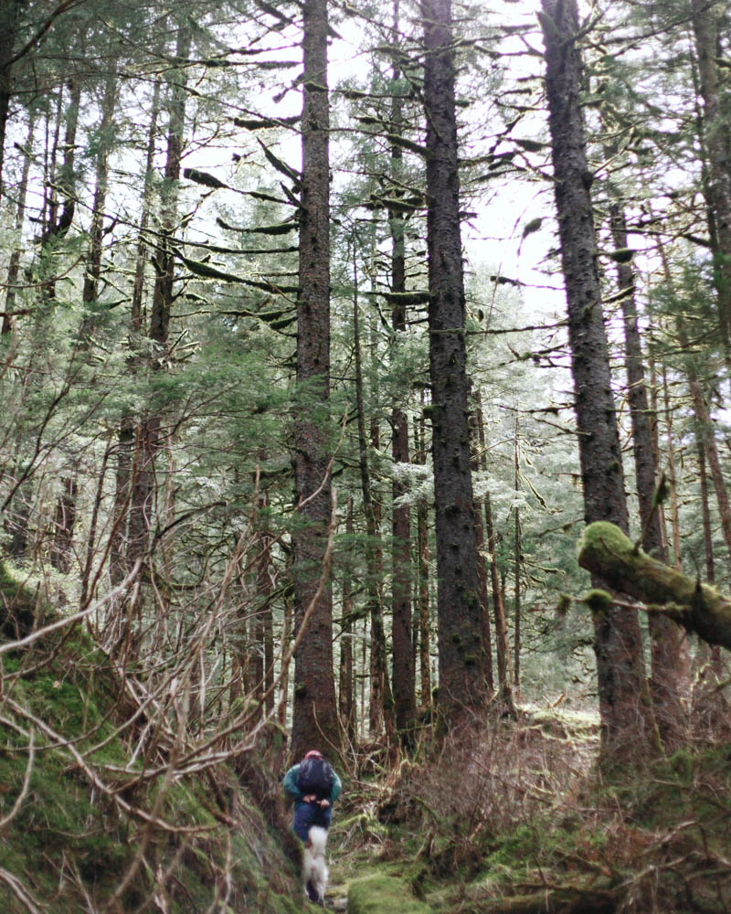Places to Visit in Juneau, Alaska ↠ Lemon Creek Trail | Mallorie Owens