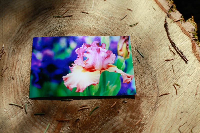 Multi-Colored Iris Spring Photography Print | MALLORIE OWENS