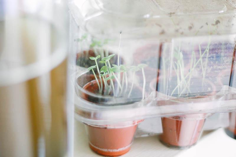 Windowsill Herbs | MALLORIE OWENS