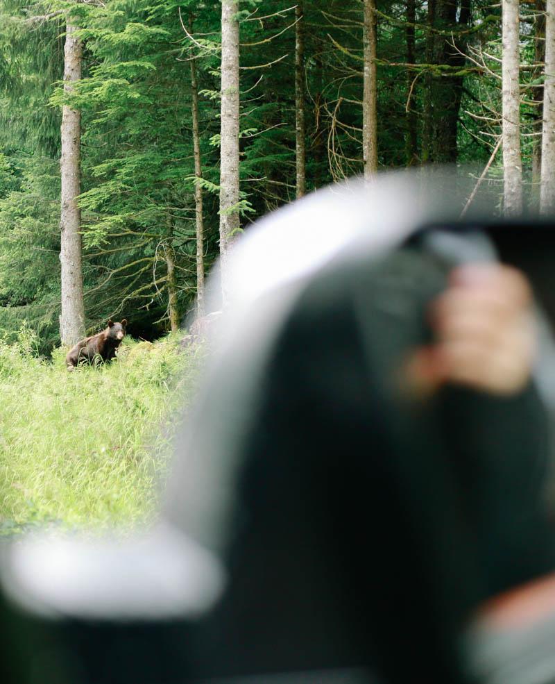 Black Bear in Juneau, Alaska | MALLORIE OWENS