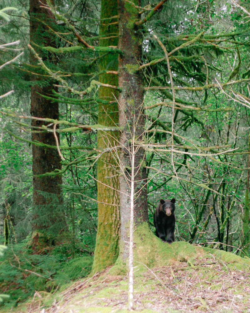 Black Bear | MALLORIE OWENS