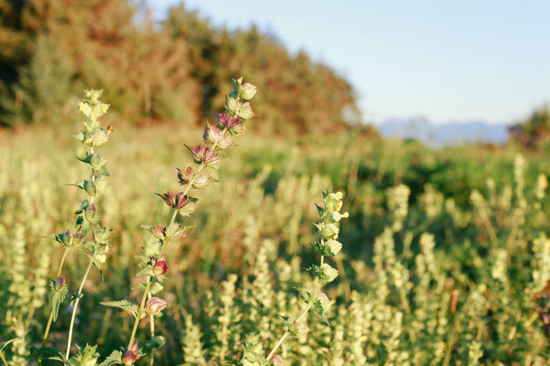Wildflowers at Point Louisa, Juneau, Alaska | MALLORIE OWENS