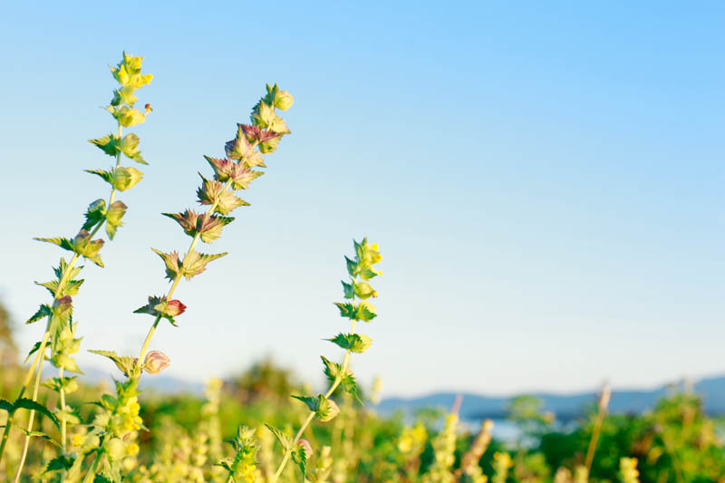 Wildflowers | MALLORIE OWENS