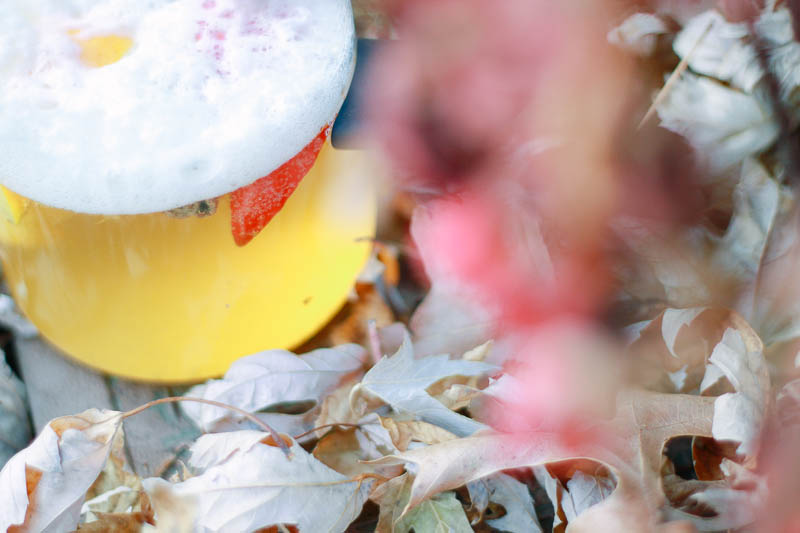 Fall Beer Infusion Using French Press Recipe | MALLORIE OWENS