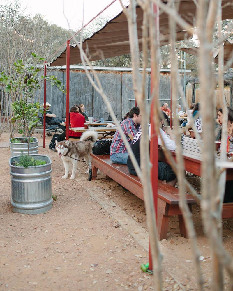 Dog Friendly Austin Restaurants | MALLORIE OWENS