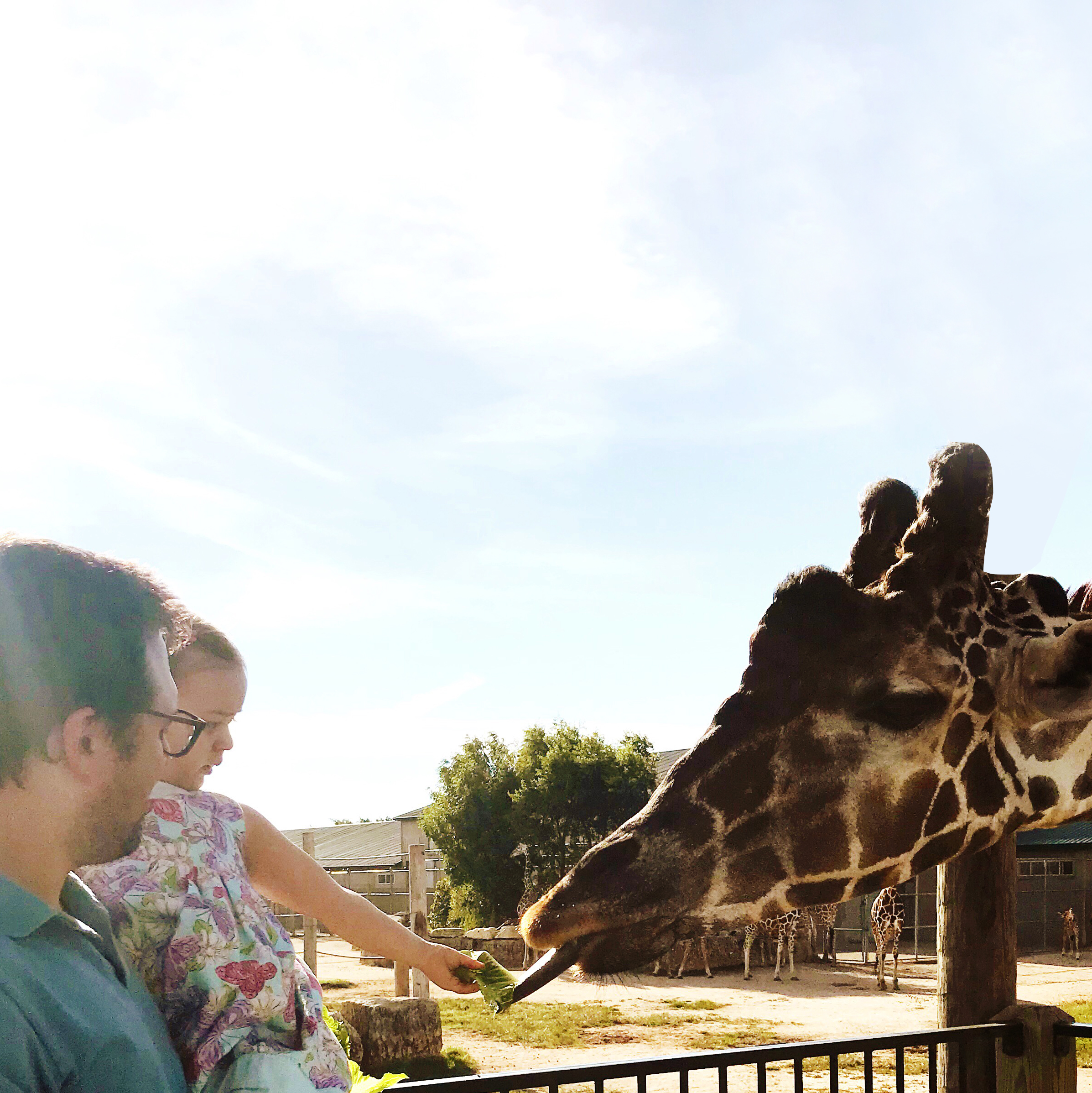 Feeding a Giraffe | Places to Visit in Wichita, KS Tanganyika Wildlife Park | MALLORIE OWENS