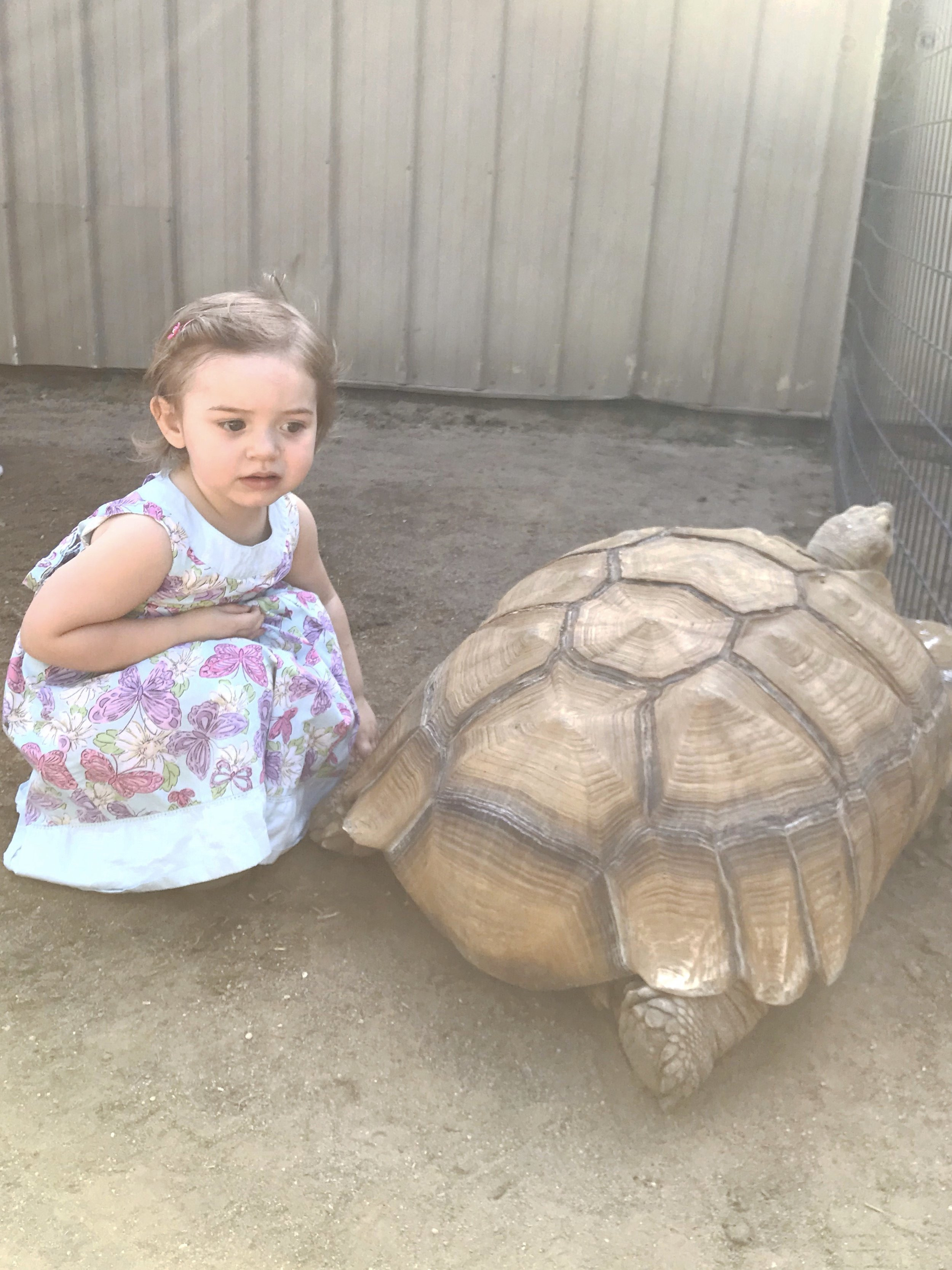 Petting a Giant Turtle | Places to Visit in Wichita, KS Tanganyika Wildlife Park | MALLORIE OWENS