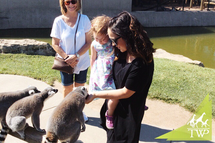 Feeding Lemurs | Places to Visit in Wichita, KS Tanganyika Wildlife Park | MALLORIE OWENS