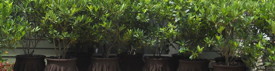 hedges-for-rent.jpg