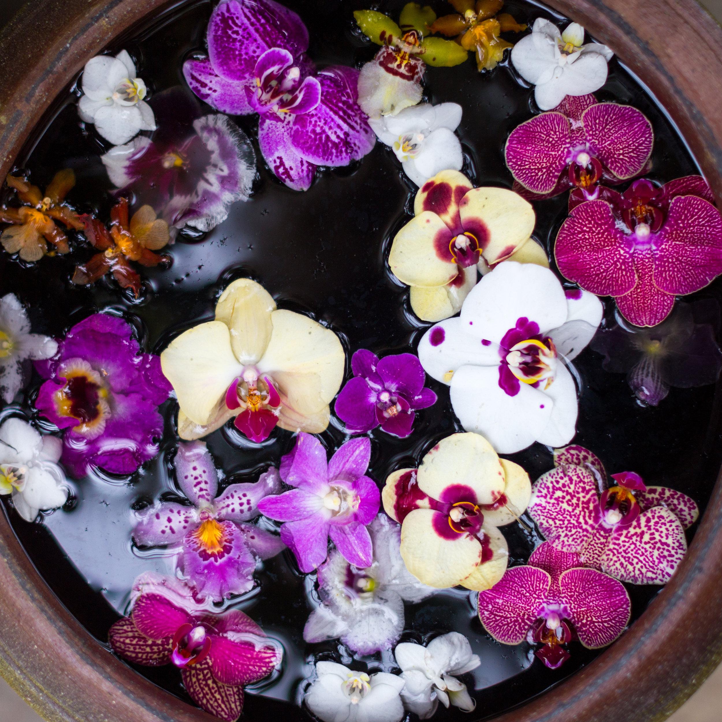 Orchid New York Botanical Garden Spring_-2.jpg