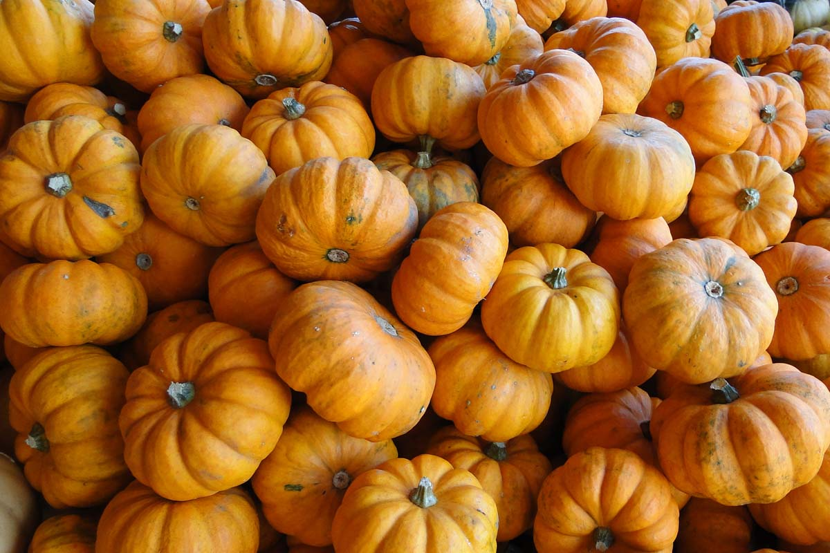 photo-pumpkin-f5sc.jpg